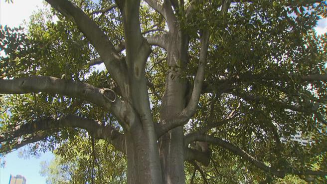 สภาเมืองเมลเบิร์นทำเก๋ ชวนคนอีเมลถึงต้นไม้